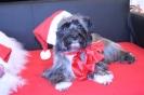 Dixi und Coco im Weihnachtskost�m